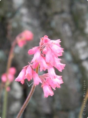 Весенние цветочки фото 33