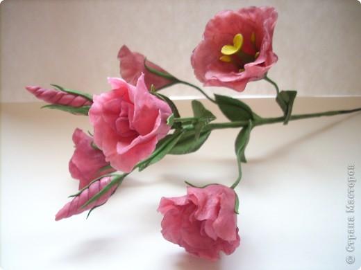 Нежные трубчатые цветки, окрашенные в акварельные тона всех цветов радуги, напоминающие то ли Эшшольцию, то ли Мак.Вырастить Эустому из семян не просто, и в культуре она требует особых навыков и знаний.  фото 2