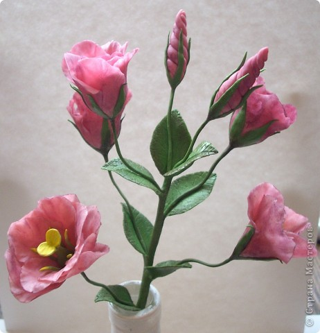 Нежные трубчатые цветки, окрашенные в акварельные тона всех цветов радуги, напоминающие то ли Эшшольцию, то ли Мак.Вырастить Эустому из семян не просто, и в культуре она требует особых навыков и знаний.  фото 3