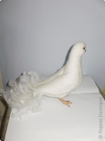 летит моя голубка вуаля фото 3