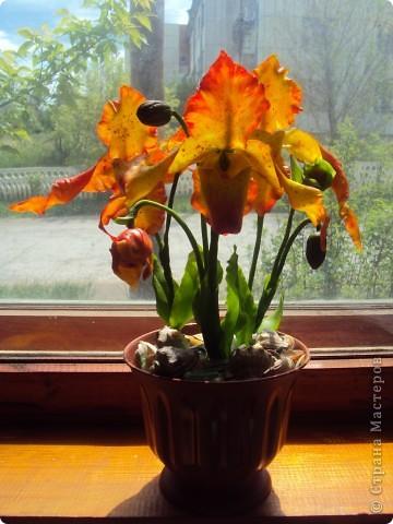 Спасибо большое Найдёновой Галине за МК орхидеи  Венерин башмачёк и Самокрутовой Татьяне ориентировалась на её солнечных орхидей.  фото 2