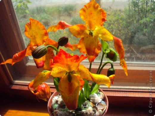 Спасибо большое Найдёновой Галине за МК орхидеи  Венерин башмачёк и Самокрутовой Татьяне ориентировалась на её солнечных орхидей.  фото 3