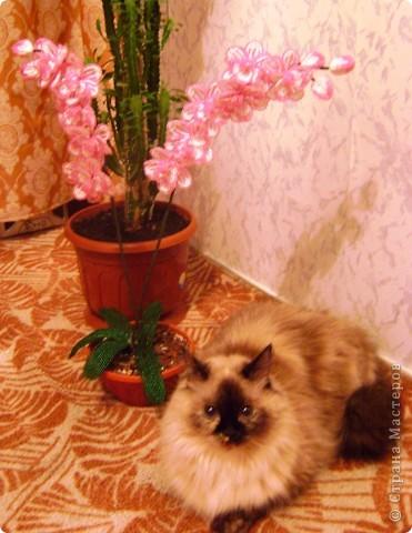 Орхидейка для мамы фото 6