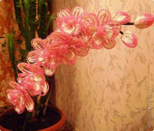 Орхидейка для мамы фото 8