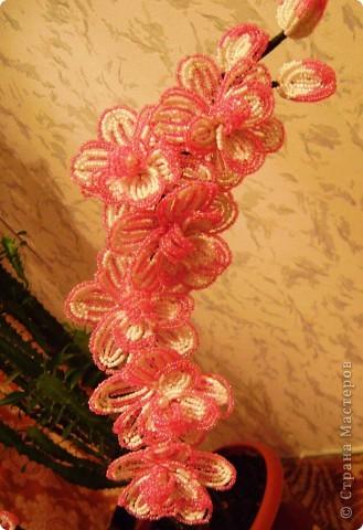 Орхидейка для мамы фото 7