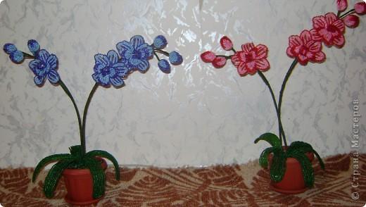 Орхидейка для мамы фото 5