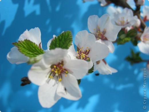 Здравствуйте, милые мастерицы. Сегодня я к вам с веточкой цветущей яблони. По совету Анечки Демаковой хотела добавить опавшие лепесточки вниз, но мама и сын запротестовали. Оставила в таком виде фото 15