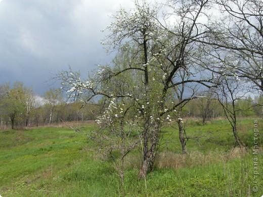 Здравствуйте, милые мастерицы. Сегодня я к вам с веточкой цветущей яблони. По совету Анечки Демаковой хотела добавить опавшие лепесточки вниз, но мама и сын запротестовали. Оставила в таком виде фото 5