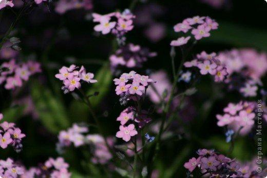 мои тюльпаны фото 3