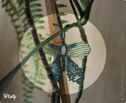 Бабочки фото 2