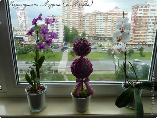 "Топиарий ""Гортензия"" фото 4"