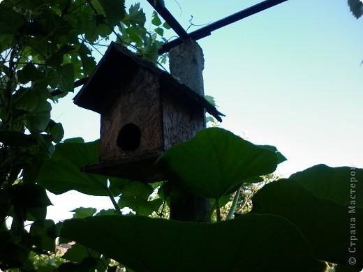 Домашний сад фото 11