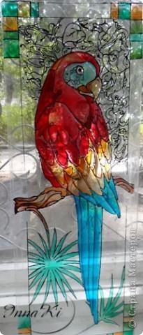 Вот такой попугайчик у меня нарисовался)это фото со вспышкой фото 3