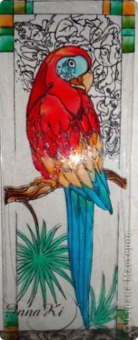 Вот такой попугайчик у меня нарисовался)это фото со вспышкой фото 1