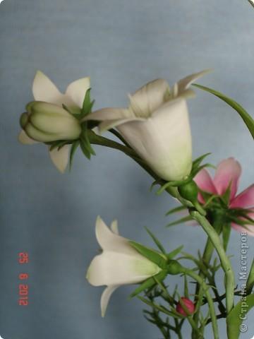 Просто цветы фото 2