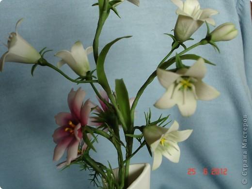 Просто цветы фото 4