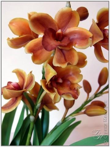 Орхидея цимбидиум. Пожалуй, на сегодняшний момент из всех своих работ эту я полюбила больше всех (хотя и она не без недостатков)))) Ну, и еще ванду))) фото 4