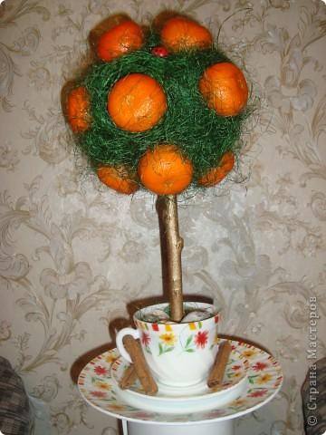 Моё мандариновое деревце))) фото 1