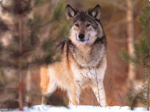 http://www.oninfo.ru/oboi_rabochego_stola/animals/6152.html