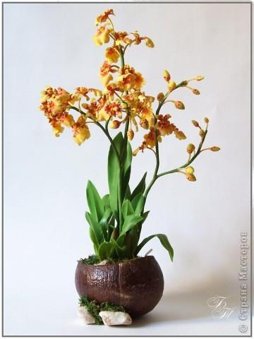 Доброго всем времени суток))) Торопилась перед отпуском закончить свои орхидейки, но успела только онцидиум. Дендробиум и вторая каттлея будут теперь ждать моего возвращения))) Глина - Thai Clay, высота - около 50 см. фото 1