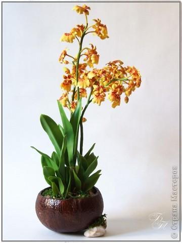 Доброго всем времени суток))) Торопилась перед отпуском закончить свои орхидейки, но успела только онцидиум. Дендробиум и вторая каттлея будут теперь ждать моего возвращения))) Глина - Thai Clay, высота - около 50 см. фото 2
