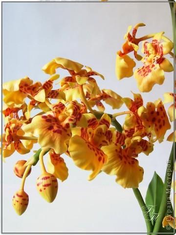 Доброго всем времени суток))) Торопилась перед отпуском закончить свои орхидейки, но успела только онцидиум. Дендробиум и вторая каттлея будут теперь ждать моего возвращения))) Глина - Thai Clay, высота - около 50 см. фото 3