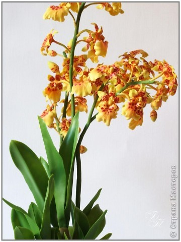 Доброго всем времени суток))) Торопилась перед отпуском закончить свои орхидейки, но успела только онцидиум. Дендробиум и вторая каттлея будут теперь ждать моего возвращения))) Глина - Thai Clay, высота - около 50 см. фото 5