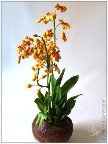 Доброго всем времени суток))) Торопилась перед отпуском закончить свои орхидейки, но успела только онцидиум. Дендробиум и вторая каттлея будут теперь ждать моего возвращения))) Глина - Thai Clay, высота - около 50 см. фото 6
