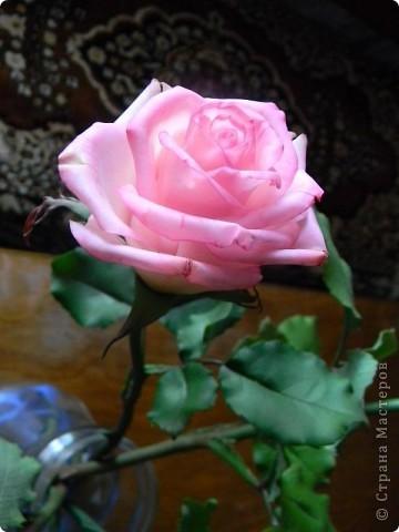 Это вторая моя роза. Первую совсем стыдно показывать))) фото 3
