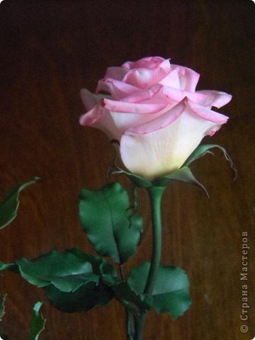 Это вторая моя роза. Первую совсем стыдно показывать))) фото 4