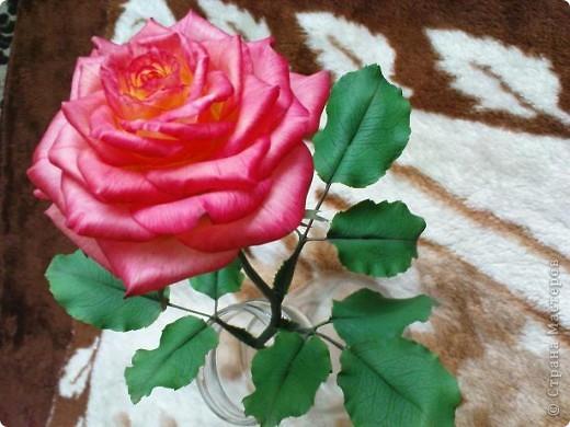 Это вторая моя роза. Первую совсем стыдно показывать))) фото 6