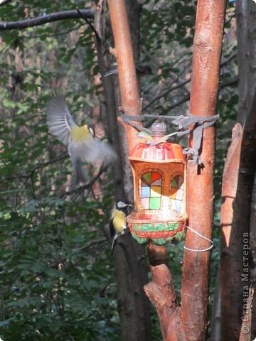 Поделка изделие Рисование и живопись Кормушки для птиц Бутылки пластиковые Клей Пеноплен фото 5