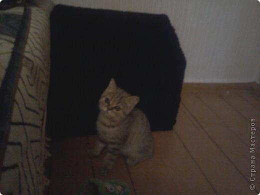 Мой лысый котик Брюс сильно мерзнет....особенно зимой! фото 7