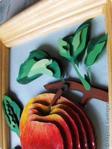 Яблоко фото 3