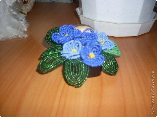 фиалки голубые фото 2