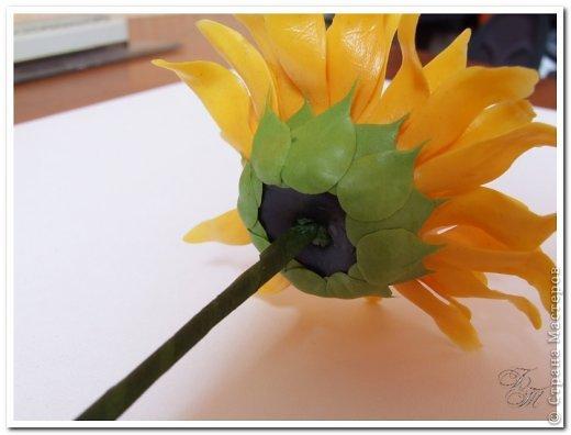 Мастер-класс Поделка изделие Лепка Подсолнухи Полный мастер-класс Глина фото 21