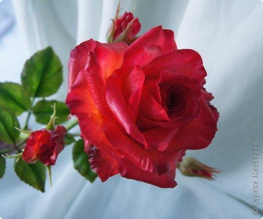 Поделка изделие 8 марта Валентинов день День рождения День учителя Свадьба Лепка розовое настроение  Фарфор холодный фото 25