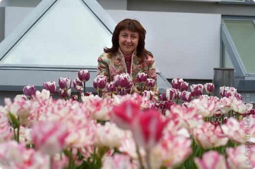 Тюльпаны и прочие цветочки фото 4
