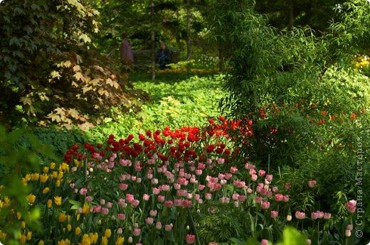 Тюльпаны и прочие цветочки фото 7
