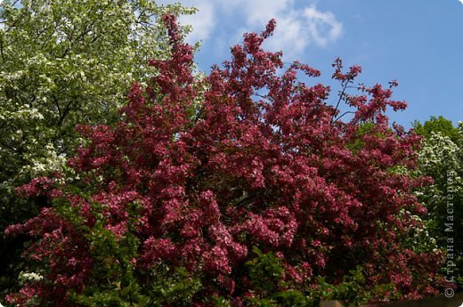 Тюльпаны и прочие цветочки фото 11