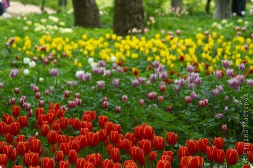 Тюльпаны и прочие цветочки фото 13