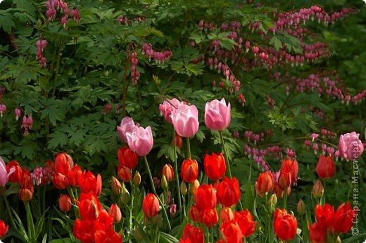 Тюльпаны и прочие цветочки фото 24