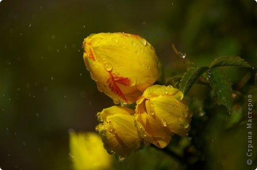 Тюльпаны и прочие цветочки фото 28