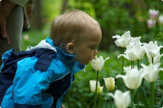Тюльпаны и прочие цветочки фото 36