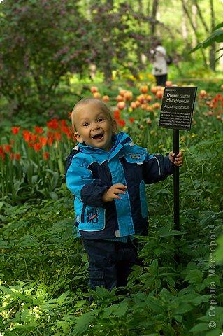 Тюльпаны и прочие цветочки фото 38