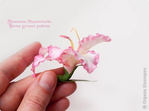 И снова здравствуйте. На этот раз хочу показать сборку цветочков-украшений с гладиолусами. Начну, пожалуй, с мутанта болотного )) фото 6