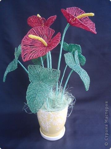тюльпаны фото 8