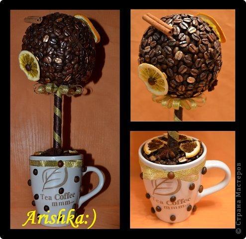 Кофейные деревья фото 9