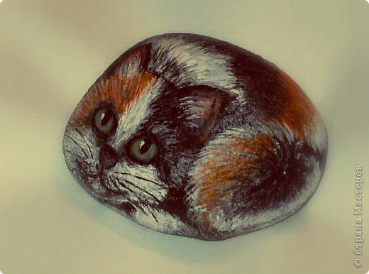 Каменный кот фото 2