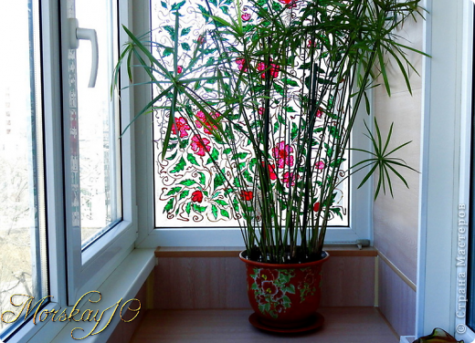 Наш вечноцветущий балкон -2